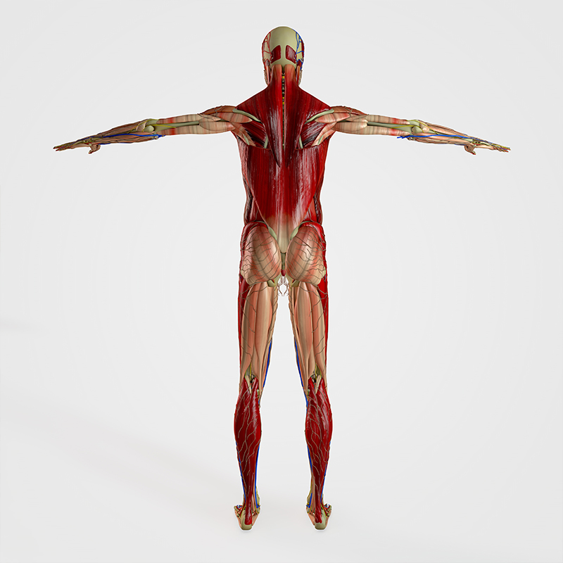Chiropractic Care for Musculoskeletal Health